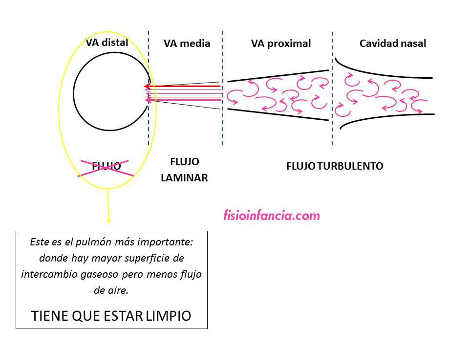fisioinfancia, fisioterapia respiratoria, flujo en las distintas áreas del aparato respiratorio